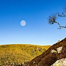 Moon and Tree - Upper Teesdale by David Lewins