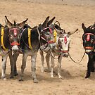 British Beach Donkeys by KMorral