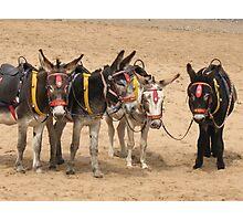 British Beach Donkeys Photographic Print