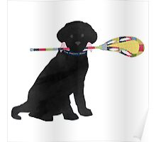 Black Lab Retriever Lacrosse Dog Poster