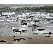 Triple Gull Photographic Print