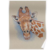 Cute Giraffe: Animal, Colour Pencil Drawing Poster