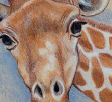 Cute Giraffe: Animal, Colour Pencil Drawing Sticker