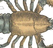 Lobster Shellfish Sea Animal Ocean Creature Shrimp Sticker