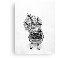 Indian Pug  Canvas Print