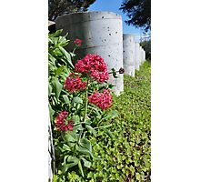 Flowers by Concrete Barriers Photographic Print