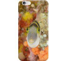 Mimic filefish - Paraluteres prionurus iPhone Case/Skin