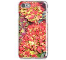 Autumn Hydrangeas, in russet colours iPhone Case/Skin