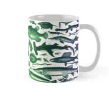 Study of Fish Mug