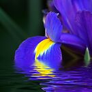 Reflections of Iris by Terri~Lynn Bealle