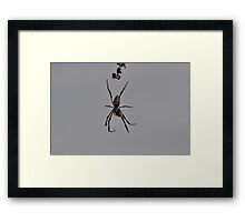 Spider,West Ryde,Australia 2016 Framed Print