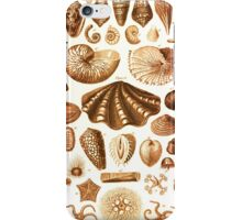Shells and Starfish Study iPhone Case/Skin