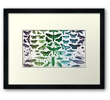 Study of Insects Framed Print