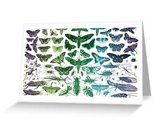 Study of Insects Greeting Card