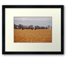 Cows In The Corn Framed Print