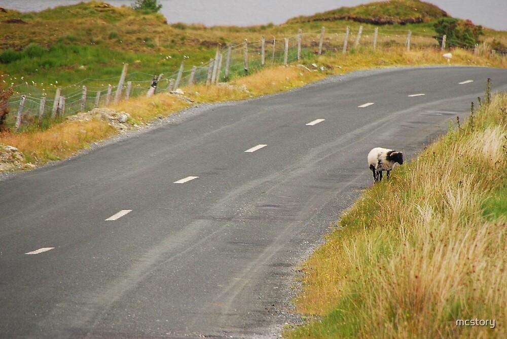 Lone Sheep by Mary Carol Story