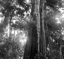 Rainforest in black and white  by Margaret Stanton