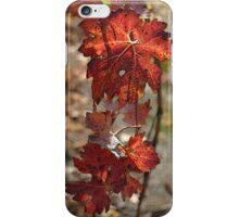 Bridgetown Vine Leaves iPhone Case/Skin