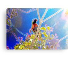 Rainbow Lorikeet in a Tree Canvas Print