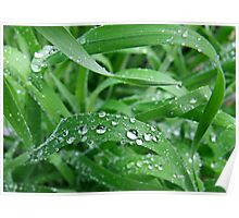 Dew Drops on Grass Poster