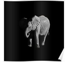 Baby African Elephant Portrait Poster