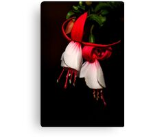 Red & White Fuchsia  Canvas Print
