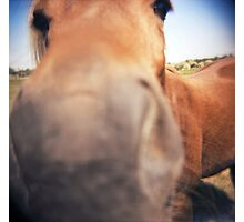 The Nosey Horse Photographic Print