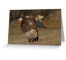 Red-tailed Hawk in Flight Greeting Card