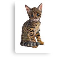 Bengal Kitten Looking Up, Colour Pencil Art Canvas Print