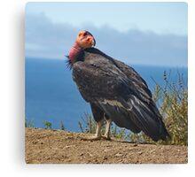 Condor in Big Sur, California Canvas Print