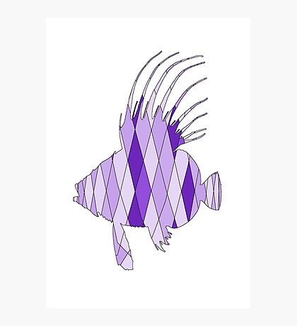 Dory Fish Photographic Print