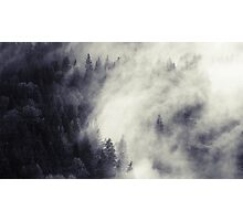The Dark Forest 3 Photographic Print