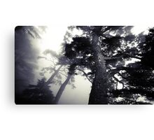 The Dark Forest 5 Canvas Print
