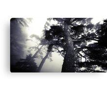 The Dark Forest 5 Canvas Print