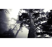 The Dark Forest 5 Photographic Print
