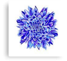 Beautiful unique deep blue chrysanthemum Canvas Print