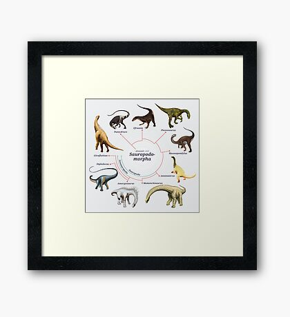Sauropodomorpha: The Cladogram Framed Print