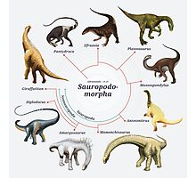 Sauropodomorpha: The Cladogram Photographic Print