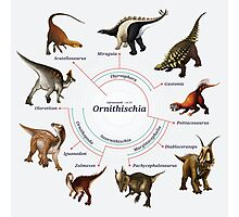 Ornithischia: The Cladogram Photographic Print