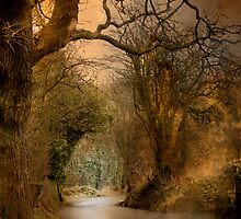 A country lane . by Irene  Burdell
