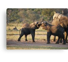 Playful Elephants Canvas Print