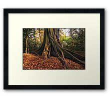 Wingham Brush Framed Print