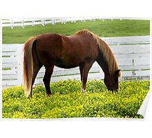 Kentucky Gold ~ Race Horses Poster