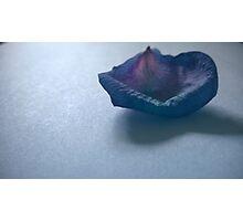 Purple Rose Petal Photographic Print
