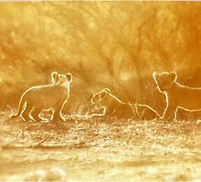 "THE ""THREE"" LITTLE LION CUBS, a Last light capture - THE LION – Panthera leo by Magriet Meintjes"