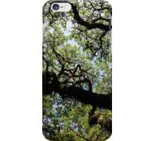 Winding Branches iPhone Case/Skin
