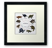 Testudinata: The Cladogram Framed Print