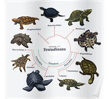 Testudinata: The Cladogram Poster