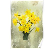 Daffodils in springtime Poster