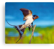 Swallow Bird - Oil Painting Canvas Print